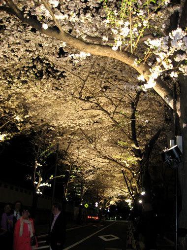 Sakura0902_2