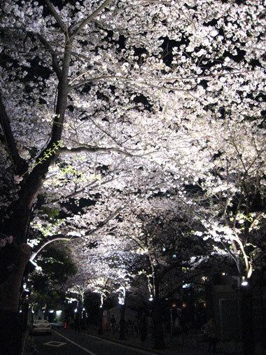 Sakura0903